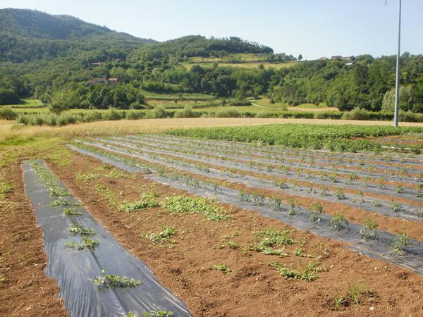 verdure a Vicenza