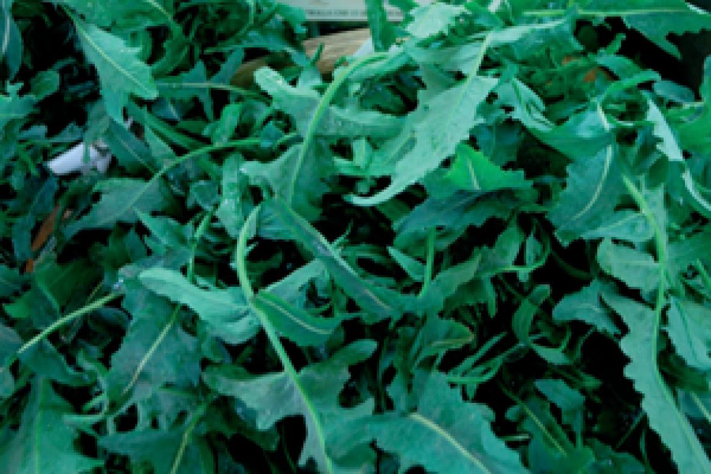 Broccoli Fiolari